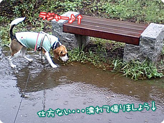 仕方ない・・・濡れて帰りましょう