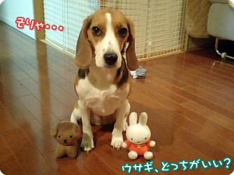 ウサギ、どっちがいい?