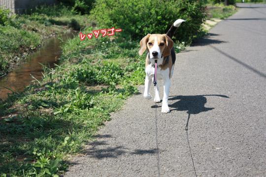 散歩へGO